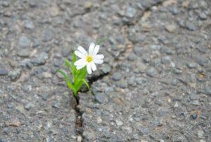 Resilience - Trouvez des solutions avec AMC Ressources, méthode et outils concrets